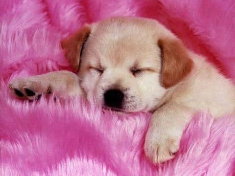 Magnifique-photo-de-chien-trop-mignon-2