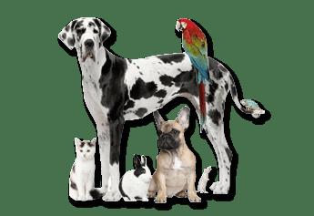 logo garde de chien