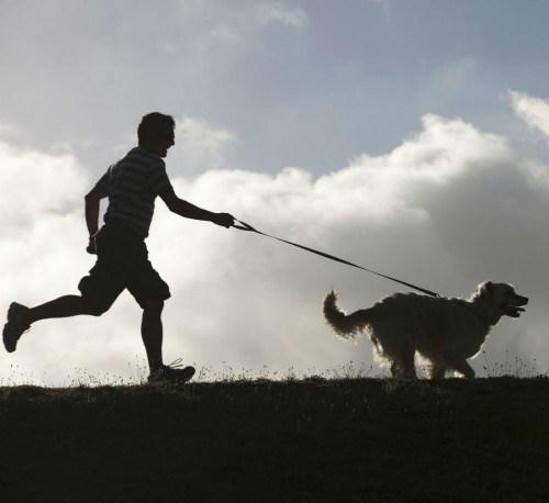 Dog Sitter Aude