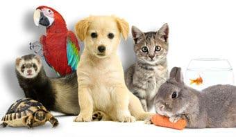 animaux_ensemble